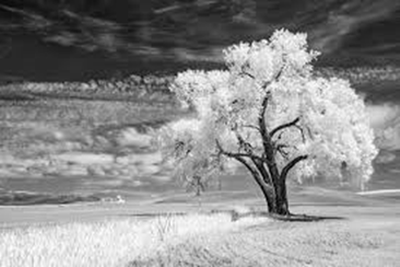 The ABC of Photography – Infrared photographs